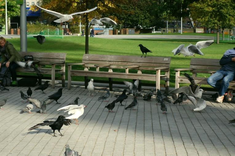 London Birds Park