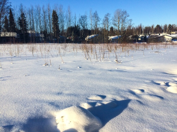 Blogging in Snowy Finland